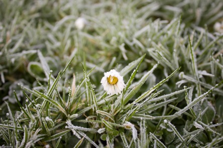 frost-1149002_1280