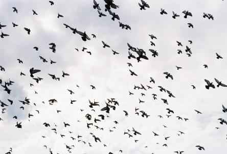 birds-2247864_960_720.jpg