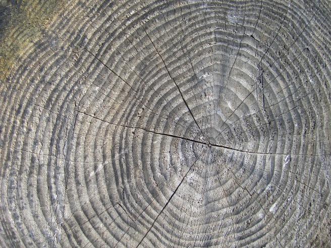 wood-423405_1920