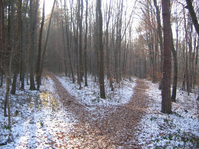 forest-path-238887_1920.jpg