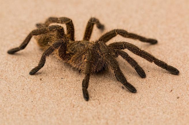 spider-642640_1920