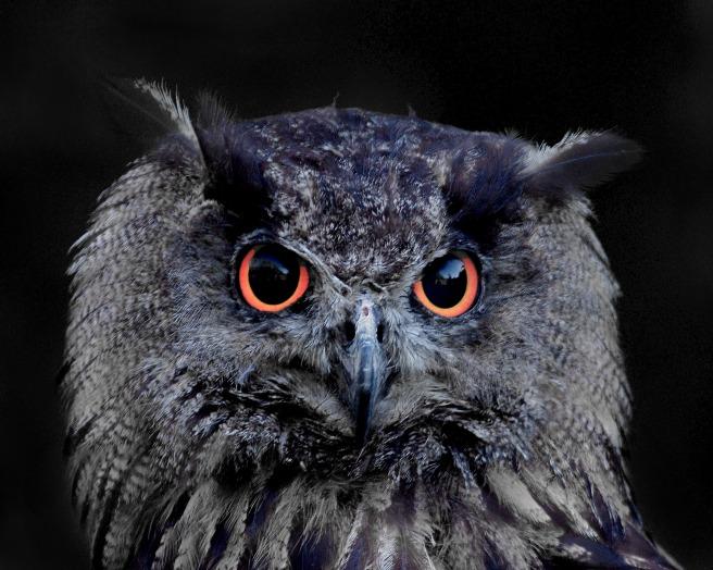 owl-1332759_1920