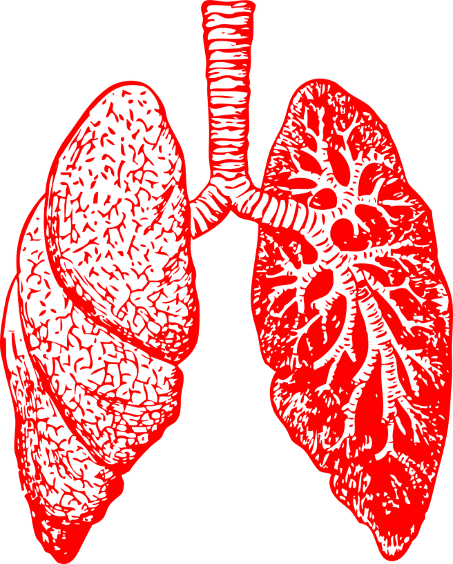 lungs-297492_1280.png